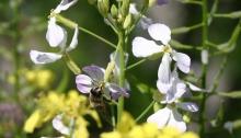 langkop wesp op bloemetjes mix