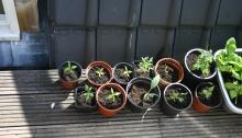 kleine_plantjes